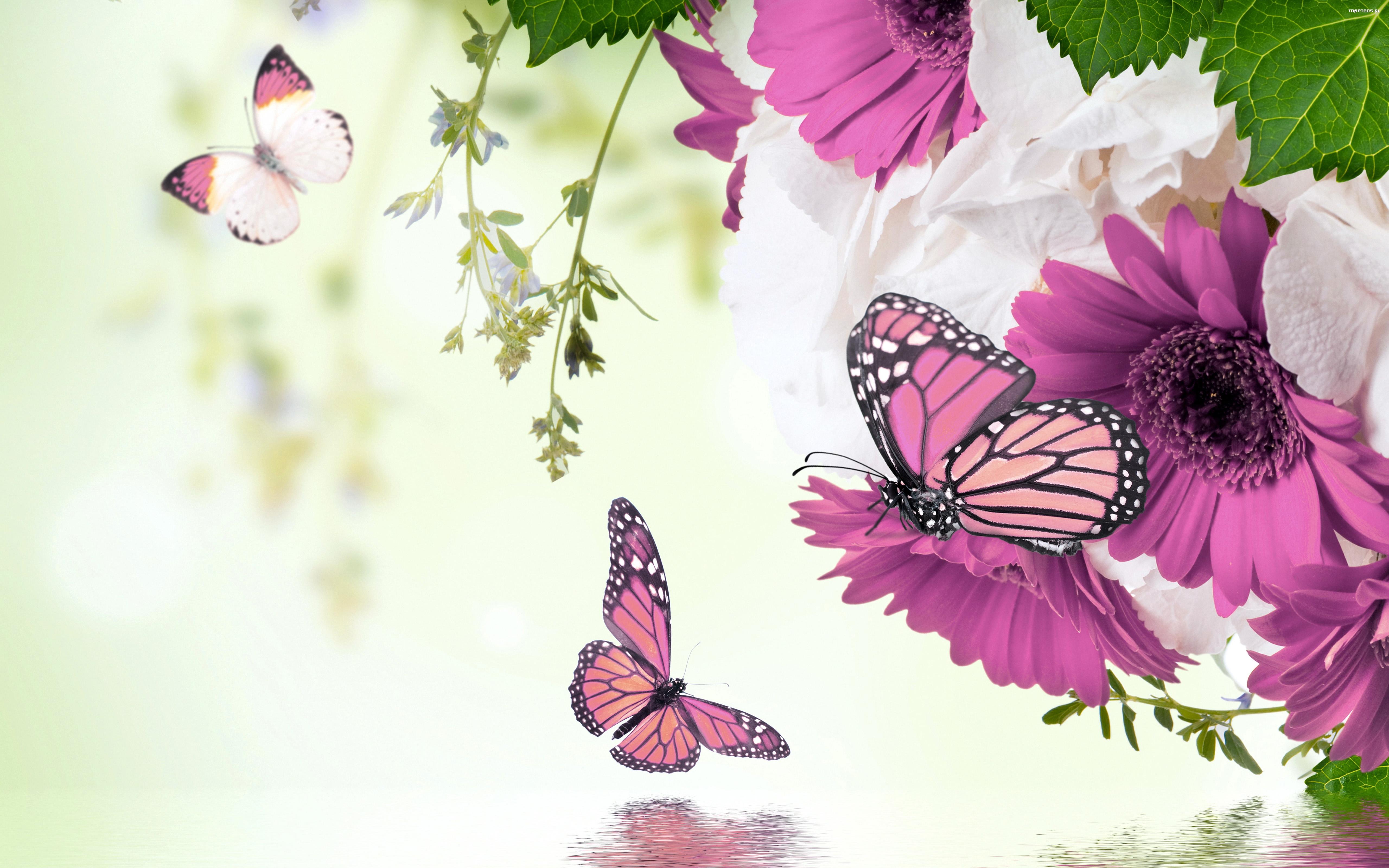 Wiosna motyle kwiaty tapeta for Fondos de computadora en 3d