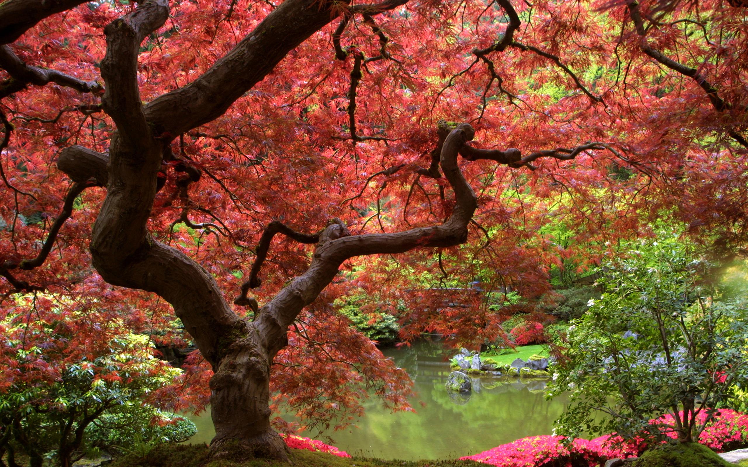 Японское поро hd 7 фотография