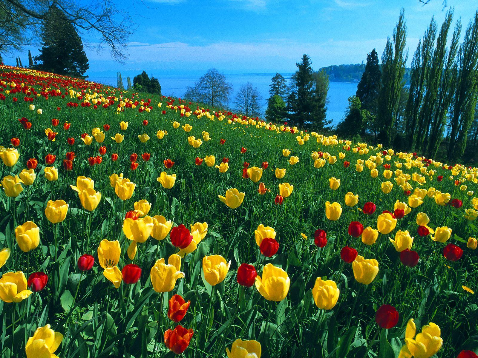 Tagi  Wiosna   Spring   Krajobraz