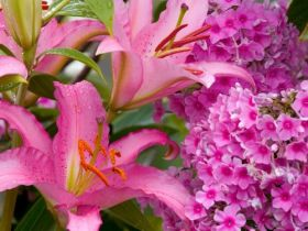 Lilies and Phlox