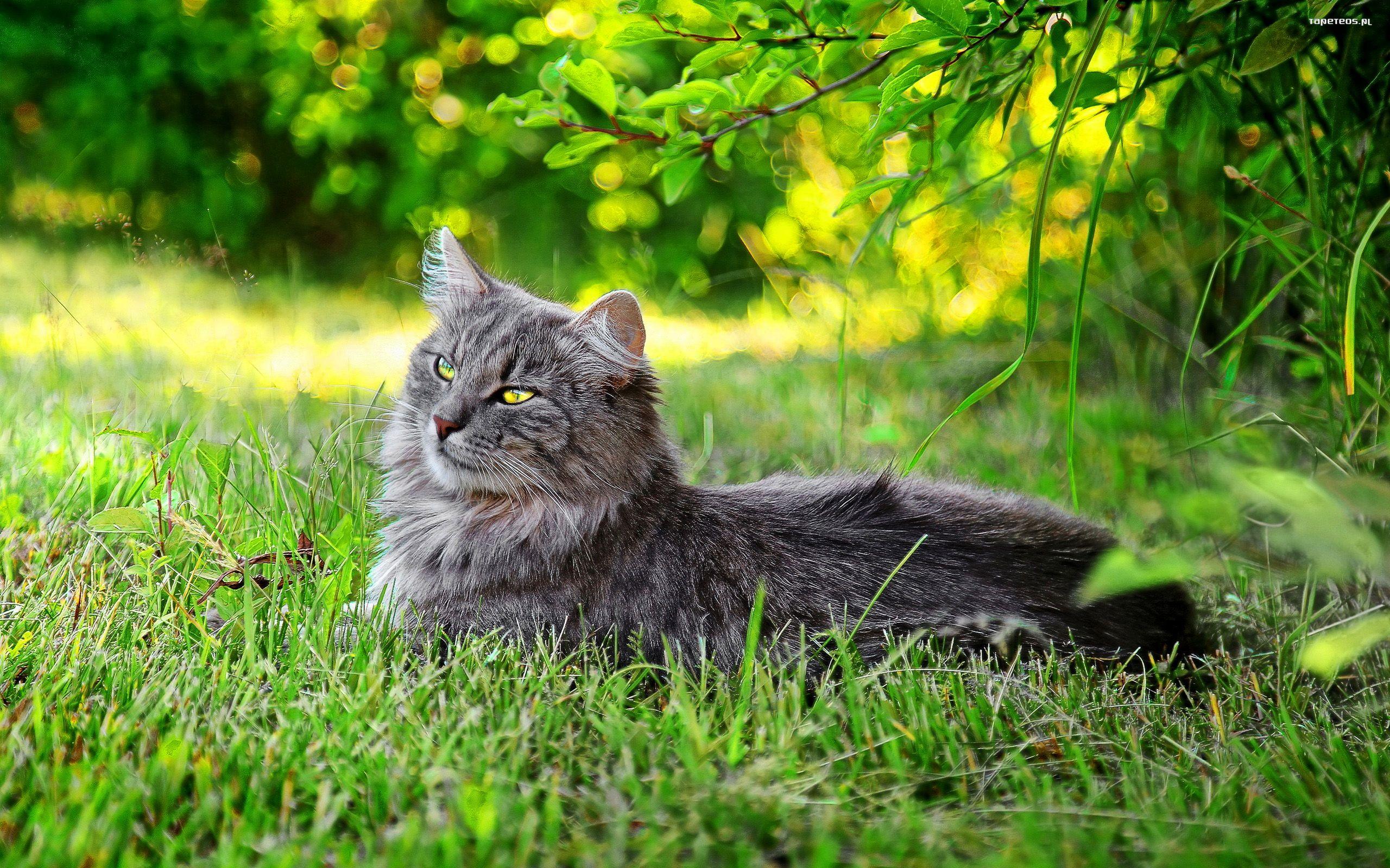 природа животные кот серый язык загрузить