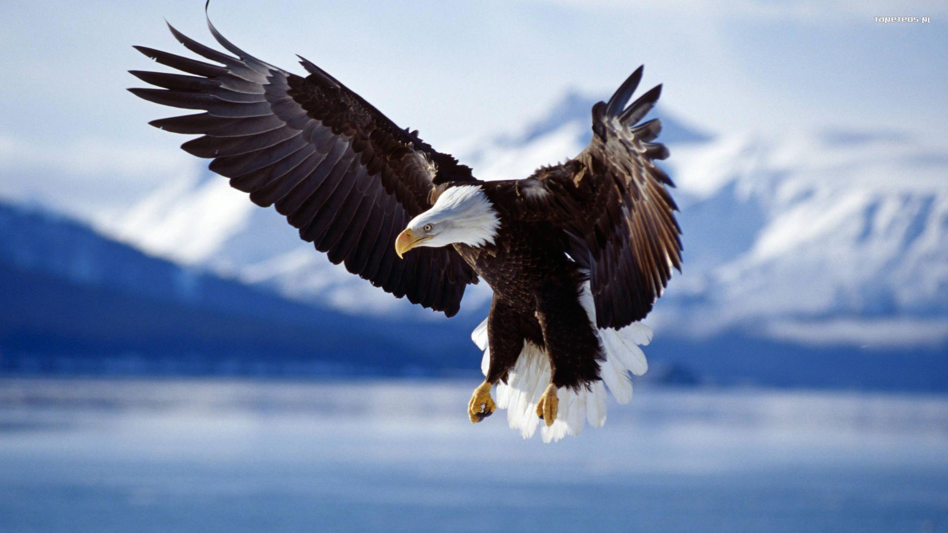 Орел над горными хребтами анонимно