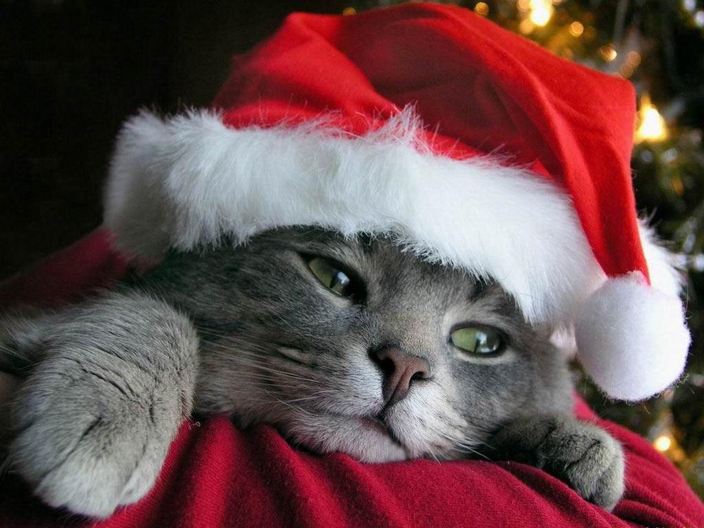 Gwiazdka 196 święta Mikołaj Kot Tapety Na Pulpit