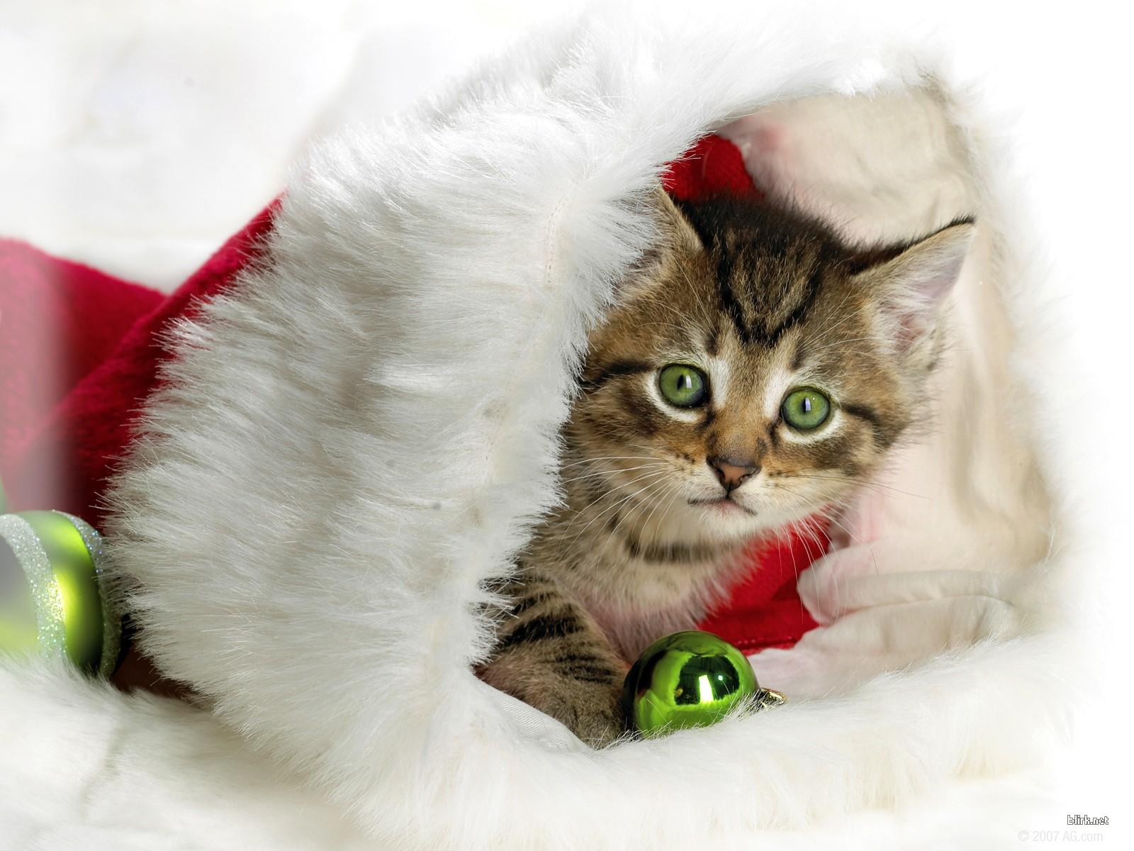 Gwiazdka 329 święta Mikołaj Kot Tapety Na Pulpit