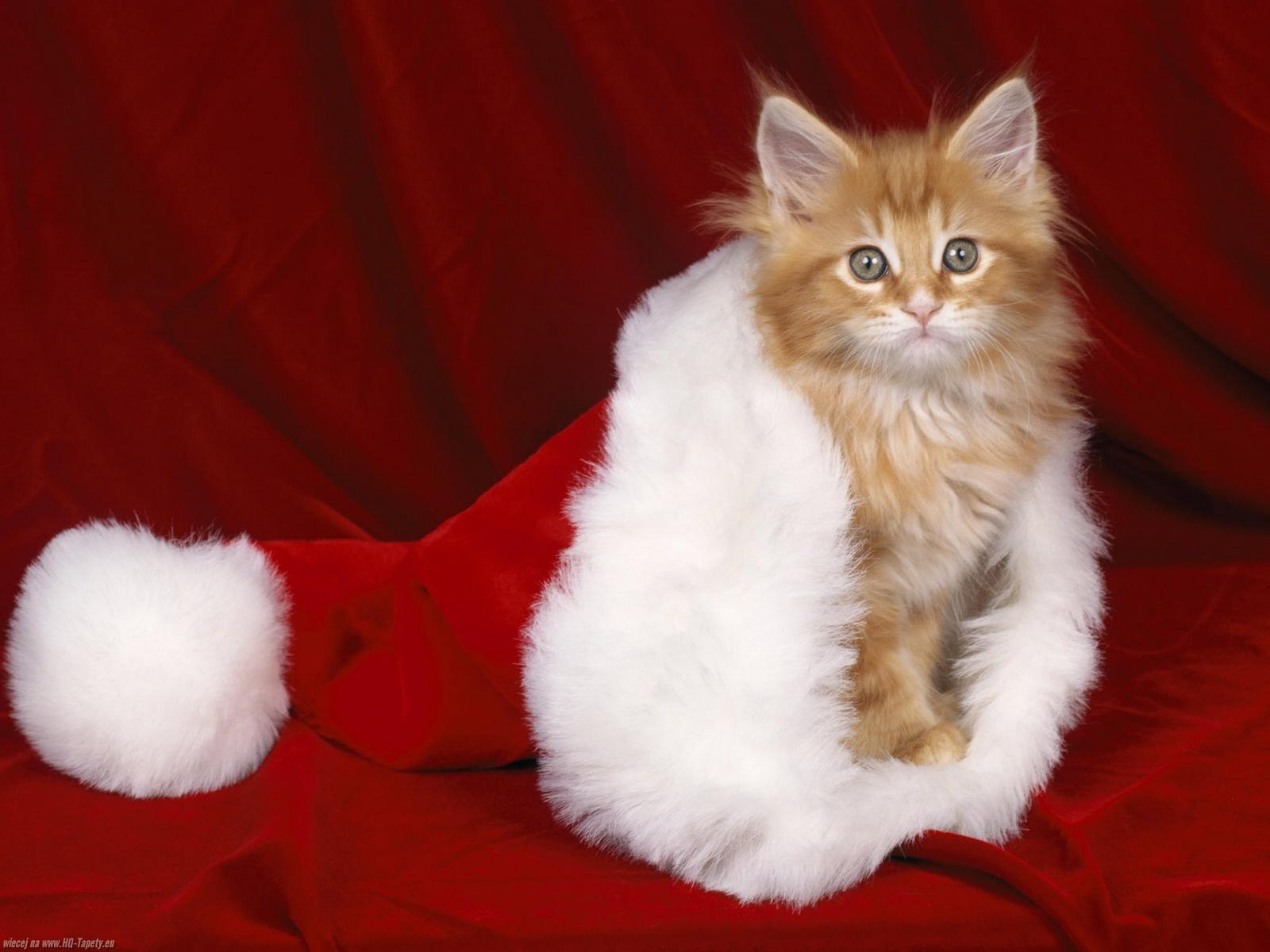 Gwiazdka 392 święta Mikołaj Kot Tapety Na Pulpit