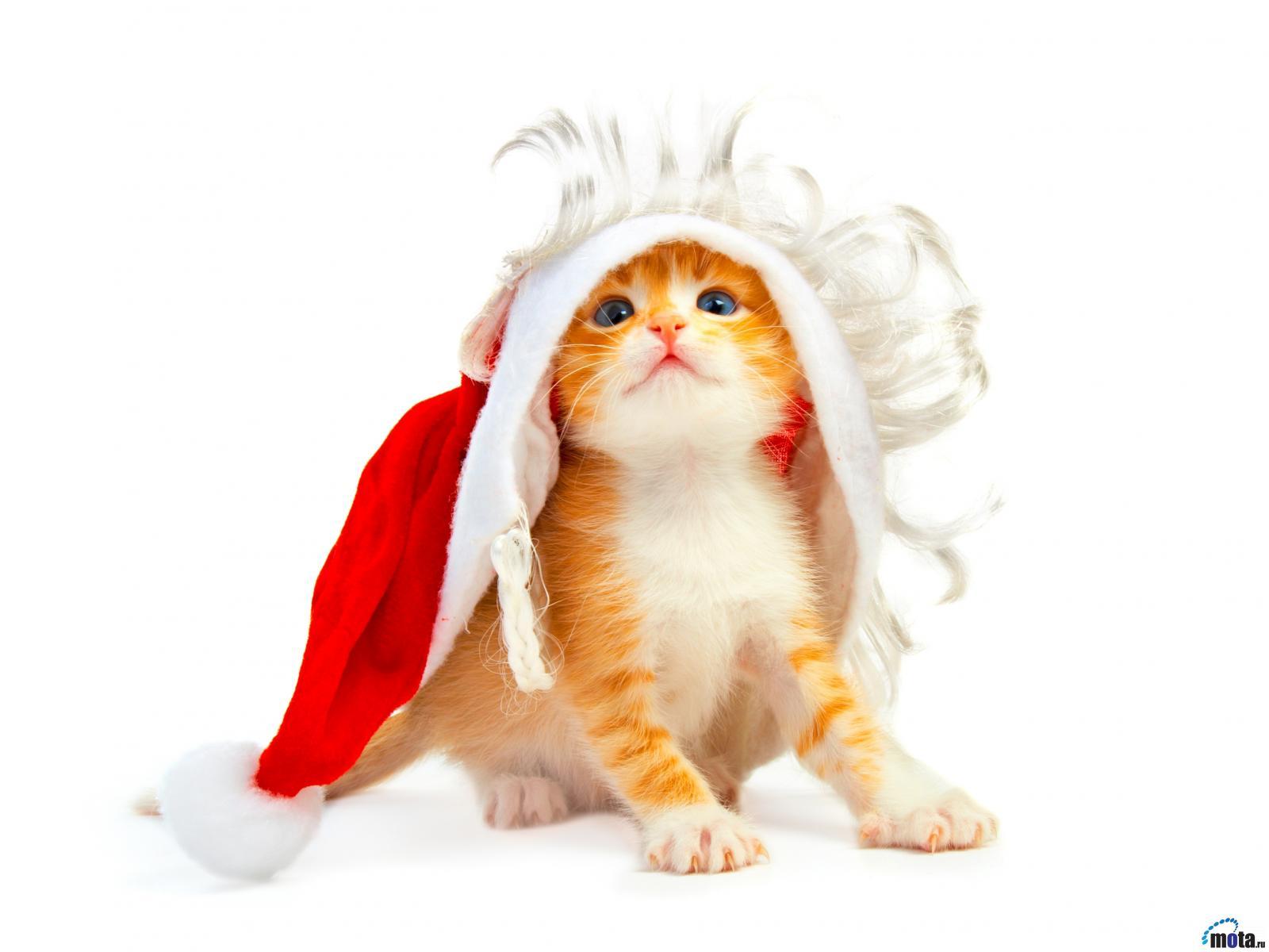 Gwiazdka 396 święta Mikołaj Kot Tapety Na Pulpit