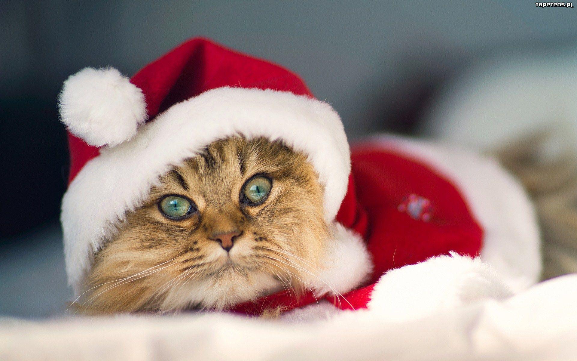 Tapety Na święta Koty Wwwbilderbestecom