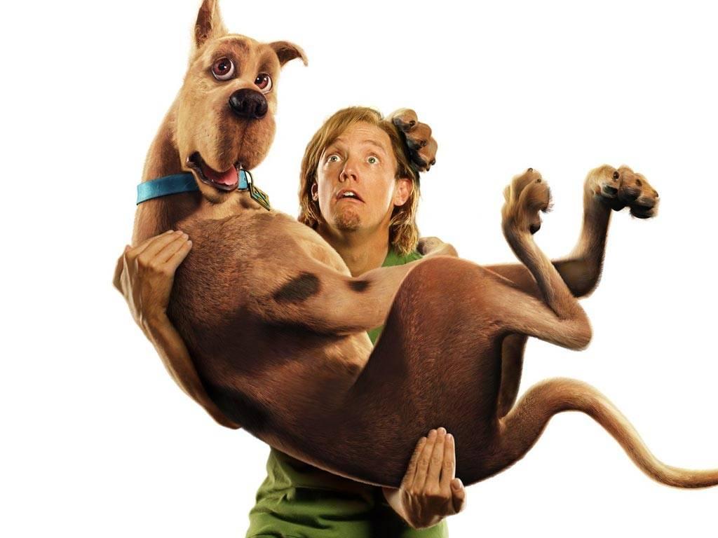 Scooby doo 03 tapety na pulpit - Scooby doo sammy ...