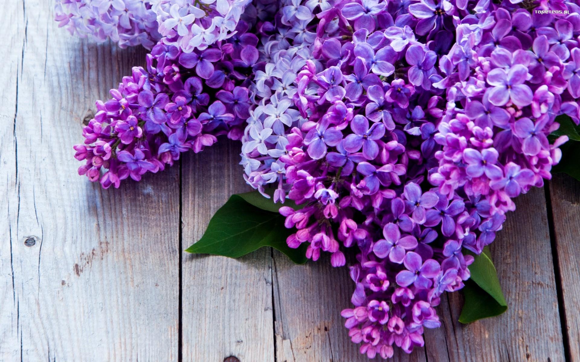 Bez 009 Wiosna Kwiaty Tapety Na Pulpit