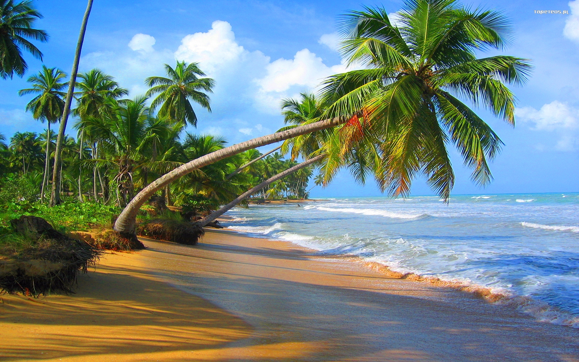 10 Most Popular Beautiful Beach Backgrounds Palm Trees: Lato Summer 1920x1200 110 Palmy, Hawaje, Ocean, Plaza